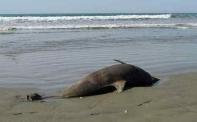 МОСВ: Делфините умират заради рибарските мрежи