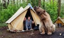 Кафява мечка за домашен любимец на къмпинг