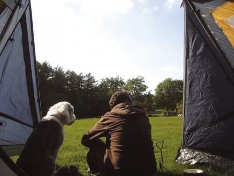 Топ съвети за щастлив къмпинг с куче